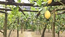 Sorrento Farm Experience Including Tastings, Pizza Making and Limoncello, Sorrento, Food Tours