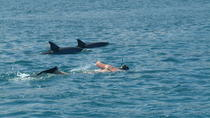 Dolphin Swim and Bénitiers Island Day Trip with Lunch, Port Louis, Dolphin & Whale Watching