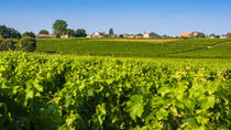 Half-Day Médoc Wine-Tasting Tour and River Cruise from Bordeaux, Bordeaux, Wine Tasting & ...