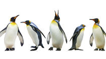 Ski Dubai Penguin Encounter, Dubai, Family Friendly Tours & Activities
