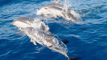 Port Stephens Day Tour From Sydney Including 4WD, Sandboarding and Dolphin Watching, Sydney, Day...