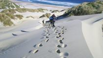 Otago Peninsula Guided Coastal Walk Including the Chasm and Lover's Leap, Dunedin & The Otago ...