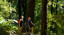 Self-Guided Queen Charlotte Track Walk from Picton, South Island, Hiking & Camping