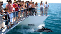 Auckland Dolphin and Whale Watching Cruise, Auckland, Dolphin & Whale Watching