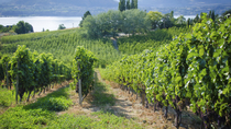 Wine Tasting with Lunch from Osoyoos, British Columbia, Wine Tasting & Winery Tours