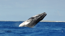 Private Tour: Whale-Watching Cruise from Grand Turk, Grand Turk