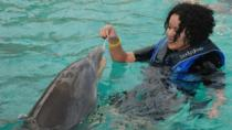 Blue Lagoon Dolphin Swim from Nassau, Nassau, Swim with Dolphins