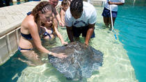 Blue Lagoon Stingray Encounter with Snorkeling, Nassau, Nature & Wildlife