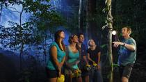 Daintree Rainforest Night Walk from Cape Tribulation, Queensland, Day Trips