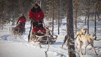 Husky Sled Ride from Luosto, Lapland, Ski & Snow