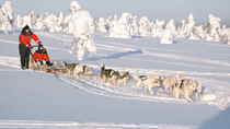 Lapland Christmas Husky Camp Visit and Sled Ride from Rovaniemi, Lapland, Christmas