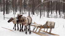Lapland Reindeer Sleigh Ride and Traditional Sami Lunch from Tromso, Tromso