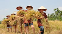 Full-Day Hoi An Town and Tra Que Vegetable Village Tour, Hoi An, Day Trips