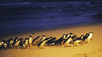 Phillip Island Multi-Day Tour from Melbourne with Optional Accommodation Upgrades, Melbourne, ...