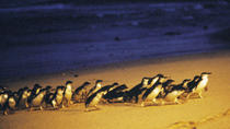 Self-Explore Phillip Island Multi-Day Tour from Melbourne with Optional Accommodation Upgrades, ...