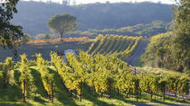 Best Napa Valley Wine Tour from San Francisco, San Francisco, Wine Tasting & Winery Tours