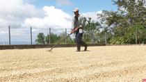 Café Las Flores Coffee Plantation Tour from Managua, Managua