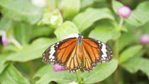 St. Maarten Combo Tour: Butterfly Farm and Orient Bay, Philipsburg, Full-day Tours