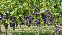 Private Irpinia Wine Tour from Naples with Sommelier, Naples, Wine Tasting & Winery Tours