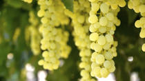 Private Irpinia Wine Tour from Sorrento with Sommelier, Sorrento, Wine Tasting & Winery Tours
