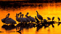Bird Watching Private Tour with Montserrat or Cava Winery, Barcelona, Custom Private Tours