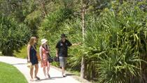 Aboriginal Heritage Walking Tour of Kings Park, Perth