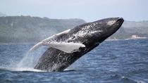 Samana Whale Watching Day Trip by Air From Punta Cana, Punta Cana, Air Tours