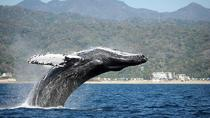 Whale Watching Day Trip From Punta Cana, Punta Cana, Dolphin & Whale Watching