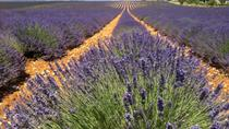 Small-Group Lavender Tour in the Luberon Villages of Lourmarin, Roussillon and Sault from...