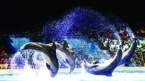 Dubai Dolphinarium Dolphin and Seal Show with Optional Aladdin Acrobatic Show, Dubai