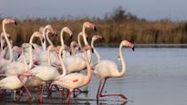 Camargue and Les Saintes Maries de la Mer Tour from Avignon, Avignon, Day Trips