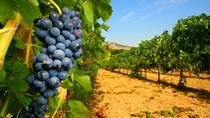 Wine Tasting in Châteauneuf du Pape from Avignon Including Lunch, Avignon, Day Trips