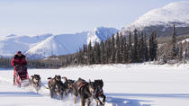 5-Day Active Winter Adventure in Yukon, Whitehorse, Multi-day Tours