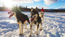 Yukon Dog Sledding Tour, Whitehorse, Ski & Snow