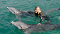 Dolphin Swim in Freeport, Freeport, Swim with Dolphins