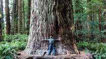 Hippie Tour of Muir Woods, Golden Gate Bridge and Sausalito, San Francisco, Day Trips