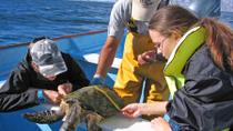 Gray Whales, Sea Turtles and Whale Sharks Expedition, Los Cabos, Multi-day Cruises