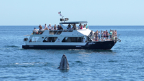 Snorkel Luncheon Cruise, Los Cabos, Day Cruises