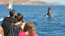 Whales of the Baja Expedition from Los Cabos, Los Cabos