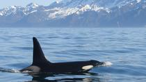 Full-Day Kenai Fjords National Park Cruise, Seward, Day Cruises