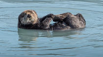 Kenai Fjords and Resurrection Bay Half-Day Cruise, Seward, Day Cruises