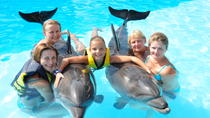 Swim with Dolphins in Sharm el Sheikh, Sharm el Sheikh, Swim with Dolphins