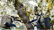 Visit of Provence and the Carrieres de Lumieres by Electric Bike from Saint-Rémy-de-Provence, ...