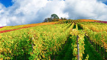Champagne Vineyards and cellars : Day Trip from Paris, Paris, Wine Tasting & Winery Tours