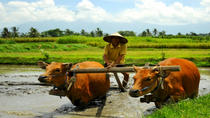 Full-Day Tour: Local Life in Bali, Kuta, Day Trips
