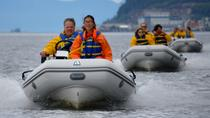 Ketchikan Shore Excursion: Zodiac Wildlife Adventure, Ketchikan, Ports of Call Tours