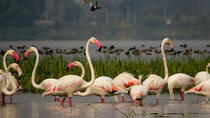 Full-Day Bird Safari Excursion to Bhigwan from Pune, Pune, Private Day Trips