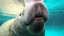 Private Manatee Tour, Crystal River, Private Sightseeing Tours