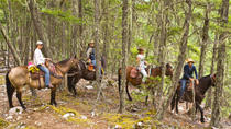 Half Day Guided Horseback Ride at Birkenhead Lake, Whistler, Air Tours