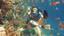 Dive Trip in Hurghada with 2 Dive Sites, Hurghada